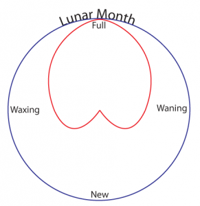 lunar-cycle-05
